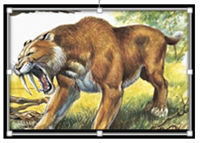 Sabre tooth.PNG (1)
